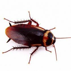 Απολυμάνσεις για κατσαρίδες στο Ίλιον - Απολυμάνσεις κατσαρίδων Ίλιον