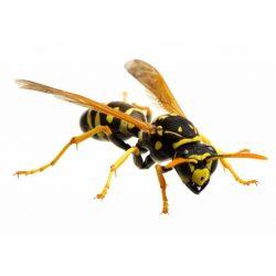 Απολυμάνσεις στο Ίλιον για σφήκες- μυρμήγκια-κοριούς-ψύλλους-κουνούπια