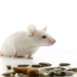 Μυοκτονίες για ποντίκια στο Ίλιον -μυοκτονίες Ίλιον