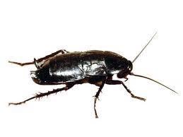Απολύμανση για κατσαρίδες σε αποχέτευση και φρεάτια με χαμηλές τιμές