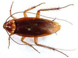 Απολύμανση για κατσαρίδες στην Αθήνα & Πειραιά