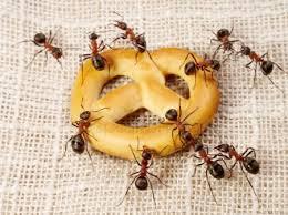 Απολύμανση μυρμηγκιών - απεντόμωση μυρμηγκιών σε μπαλκόνι