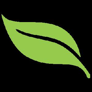 Απολύμανση ψύλλων με οικολογικά εντομοκτόνα
