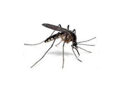 Απεντόμωση - απεντομώσεις για κουνούπια σε Αθήνα, Πειραιά με φθηνές τιμές