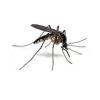 Απολυμάνσεις κουνουπιών στο Μετς-Απεντόμωσεις για κουνούπια στο Μετς