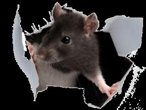 Απολύμανση για ποντίκια - απολυμάνσεις ποντικιων-μυοκτονία-μυοκτονίες
