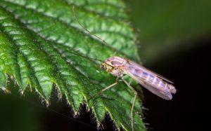 Απολύμανση κουνουπιών σε Αθήνα και Πειραιά με φθηνές τιμές
