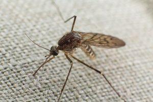 Απολύμανση κουνουπιών σε Αθήνα και Πειραιά - μπαλκόνι - βεράντα - κήπος
